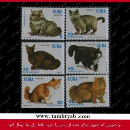 گربهها