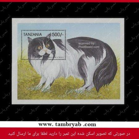 گربه پرشین سیاه و سفید